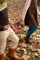 リンゴのかごを持つ少年少女2人の手元 24024000336| 写真素材・ストックフォト・画像・イラスト素材|アマナイメージズ