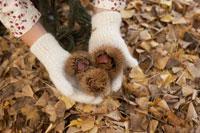 毬栗を持つ少女の手元 24024000369| 写真素材・ストックフォト・画像・イラスト素材|アマナイメージズ