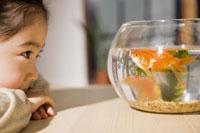 金魚鉢を見つめる少女