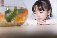 金魚鉢を見つめる少女 24028000055| 写真素材・ストックフォト・画像・イラスト素材|アマナイメージズ