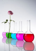 カラフルな色水とバラ