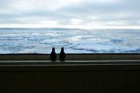 オホーツク海の流氷とおもちゃのペンギン