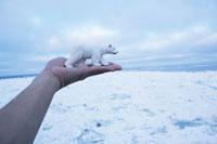 オホーツク海の流氷とおもちゃの白熊