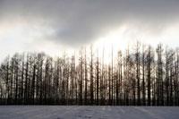 小清水町の冬景色