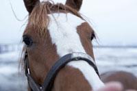 洞爺湖の馬