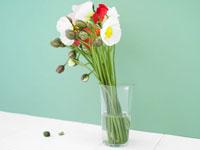 ポピーの花束 24035000028| 写真素材・ストックフォト・画像・イラスト素材|アマナイメージズ