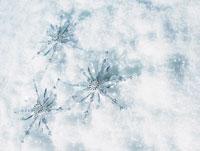 雪の上に置かれた星型オーナメント