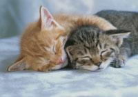 眠る2匹の仔ねこ