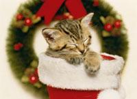 クリスマスの仔ネコ