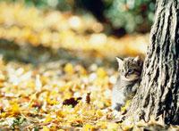 落葉と木かげのネコ 25010000677| 写真素材・ストックフォト・画像・イラスト素材|アマナイメージズ