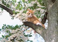 木の上の仔ネコ