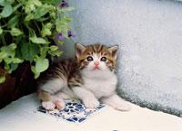 庭先の仔ネコ