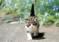 花と仔ネコ