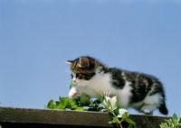 青空と仔ネコ