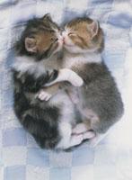 二匹の眠る子猫
