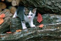 落ち葉と木と子猫 25010001791| 写真素材・ストックフォト・画像・イラスト素材|アマナイメージズ