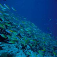 グレートバリアリーフの水中 25011000200| 写真素材・ストックフォト・画像・イラスト素材|アマナイメージズ