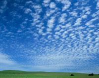 ひつじ雲 25011000480  写真素材・ストックフォト・画像・イラスト素材 アマナイメージズ
