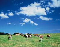 牧場 25011010513  写真素材・ストックフォト・画像・イラスト素材 アマナイメージズ