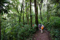 モンテベルデ自然保護区 25023068429| 写真素材・ストックフォト・画像・イラスト素材|アマナイメージズ