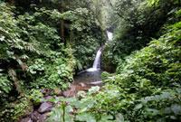 モンテベルデ自然保護区の滝 25023068430| 写真素材・ストックフォト・画像・イラスト素材|アマナイメージズ