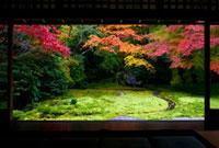 瑠璃光院 25023068810| 写真素材・ストックフォト・画像・イラスト素材|アマナイメージズ