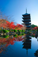 東寺 25023068871| 写真素材・ストックフォト・画像・イラスト素材|アマナイメージズ