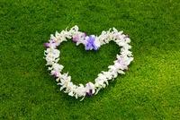 芝生の上のレイ 25023069869| 写真素材・ストックフォト・画像・イラスト素材|アマナイメージズ