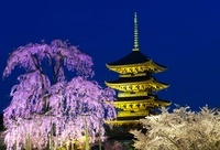 東寺 夜桜 25023070419| 写真素材・ストックフォト・画像・イラスト素材|アマナイメージズ