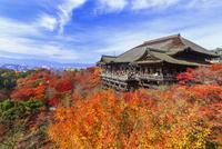 紅葉の清水寺 25023070790| 写真素材・ストックフォト・画像・イラスト素材|アマナイメージズ
