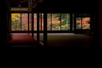 天授庵 紅葉 25023074334| 写真素材・ストックフォト・画像・イラスト素材|アマナイメージズ