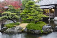 好古園 庭園 25023074351| 写真素材・ストックフォト・画像・イラスト素材|アマナイメージズ