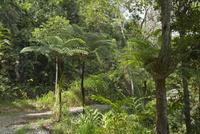 湿潤熱帯地域 25023074372| 写真素材・ストックフォト・画像・イラスト素材|アマナイメージズ