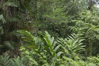 湿潤熱帯地域 25023074373| 写真素材・ストックフォト・画像・イラスト素材|アマナイメージズ