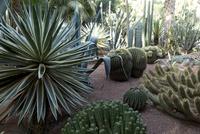 マジョレル庭園 25023074620| 写真素材・ストックフォト・画像・イラスト素材|アマナイメージズ