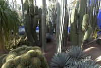 マジョレル庭園 25023074621| 写真素材・ストックフォト・画像・イラスト素材|アマナイメージズ