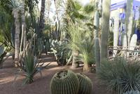 マジョレル庭園 25023074622| 写真素材・ストックフォト・画像・イラスト素材|アマナイメージズ