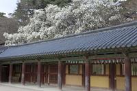 仏国寺 回廊 25023074829| 写真素材・ストックフォト・画像・イラスト素材|アマナイメージズ