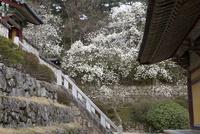 仏国寺 25023074830| 写真素材・ストックフォト・画像・イラスト素材|アマナイメージズ