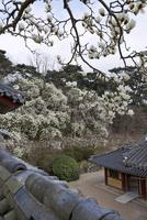 仏国寺 25023074831| 写真素材・ストックフォト・画像・イラスト素材|アマナイメージズ