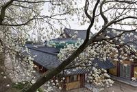仏国寺 大雄殿 25023074832| 写真素材・ストックフォト・画像・イラスト素材|アマナイメージズ