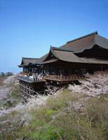 桜と清水寺