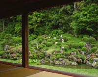 サツキ咲く龍潭寺庭園