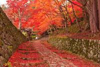 百済寺参道 25041024259| 写真素材・ストックフォト・画像・イラスト素材|アマナイメージズ