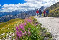 ヤナギラン咲くトレ・チーメへの登山道