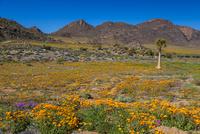花咲くグーギャップ自然保護区