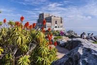 アロエの花とテーブルマウンテン山頂駅