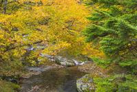 秋の輪川 25041032756| 写真素材・ストックフォト・画像・イラスト素材|アマナイメージズ