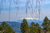 千光寺から望む木曽御嶽山 25041035541| 写真素材・ストックフォト・画像・イラスト素材|アマナイメージズ