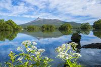 大沼と駒ケ岳 25041036197| 写真素材・ストックフォト・画像・イラスト素材|アマナイメージズ